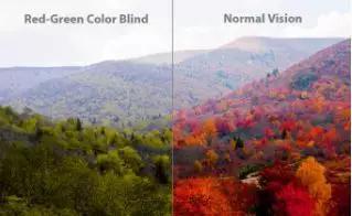 开内衣店赚钱吗:AI+光学技术,用眼镜让色盲患者重新看到世界的