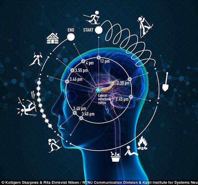 图中展示了4小时滑雪之旅经历的人脑记忆,从一个陡峭山峰,经历长达4小时的滑雪之旅,图中包括了滑雪者对时间的感知变化。该观点是有经历的时间依赖于事件过程,并且可能被认为比时钟时间更快或更慢。最新发现有经历的神经记录位于大脑内嗅皮层外侧(LEC)。在LEC旁边是大脑内嗅皮层内侧(MEC),大脑的空间位置(图没有描绘)。在大脑内嗅皮层内侧旁边是海马体,这个结构中来自时间和空间网络的信息聚集在一起形成了情景记忆