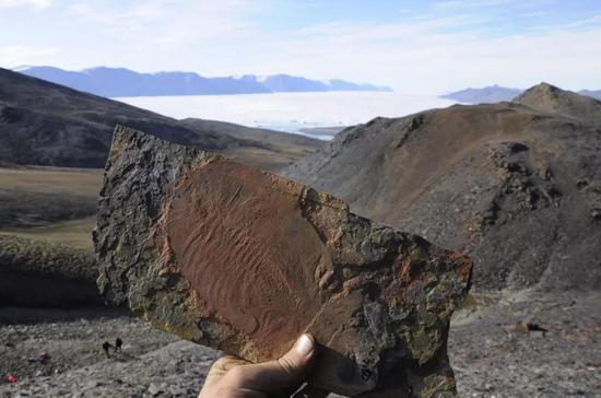 三叶虫化石涛罐。三叶虫是化石记录中最早出现的动物群体之中类艾。| 图片来源副:Jakob Vinther饶挨碳, University of Bristol