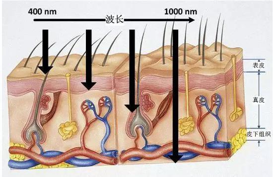 光波在皮肤组织种的传播特性:不同波长的光波可以到达不同深度的皮层