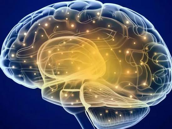 海马体的信息传递。图片来源:《自然-神经科学》