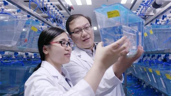 中科院潘巍峻团队首次揭示造血干细胞归巢全过程 证券资讯