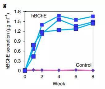 ▲这款基因疗法的疗效持久(蓝色)(图片来源:参考资料[1])
