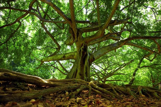 冷知识:尸体胃里保留的种子可以长出结果实的树吗?